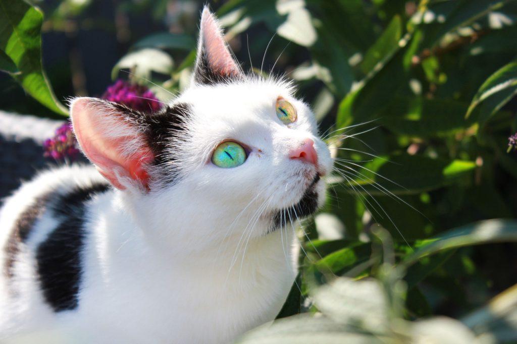 A világ 10 legszebb macskája