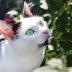 A világ 10 legszebb macskája - ezektől elolvadsz