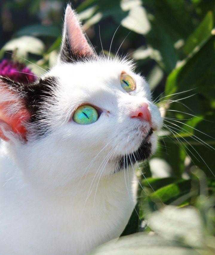 A világ 10 legszebb macskája – ezektől elolvadsz