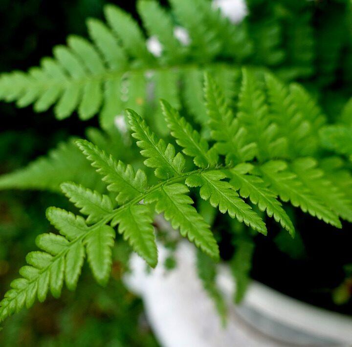 Ezekkel a növényekkel hűtheted a lakást a nyári forróságban!