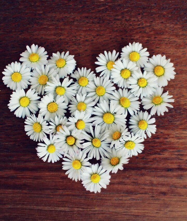 Így készíts szív alakú virágdekorációt a falra!