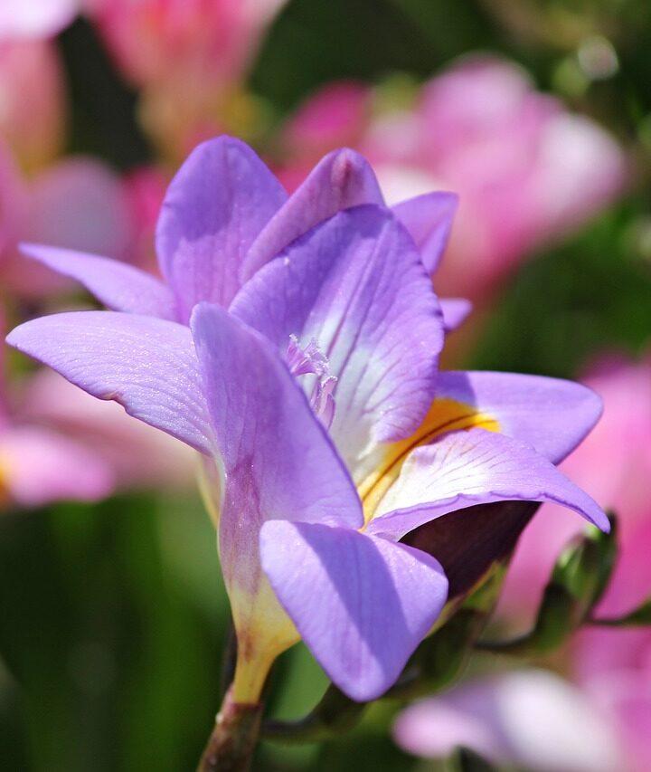 8 virágról készült fénykép, amiknek te is érezni fogod az illatát