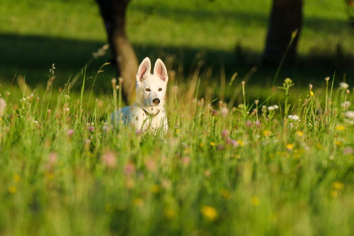Kutya a mezőn