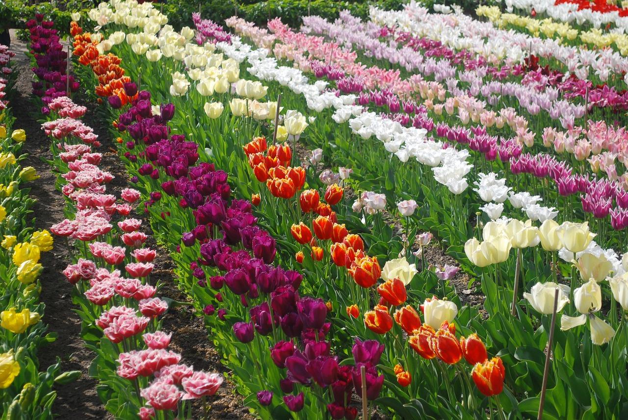 Virágsorok