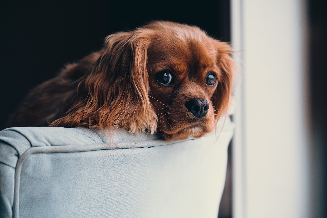 Kutya a kanapén